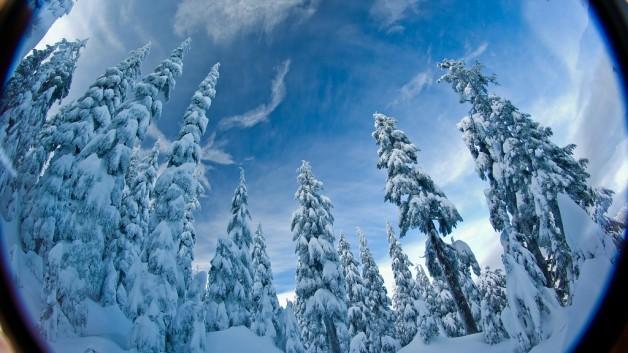 http://timesharegame.com/wp-content/uploads/gen-winter-snowy-trees-628x353.jpg