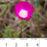 http://timesharegame.com/wp-content/uploads/oth-flower-calendar-47x47.jpg