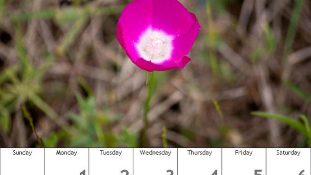 http://timesharegame.com/wp-content/uploads/oth-flower-calendar-628x353.jpg