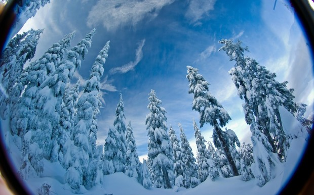 Winter scene with snow covered trees